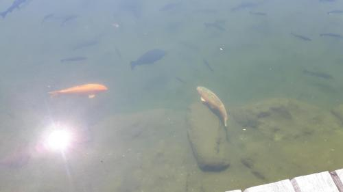Ribogojstvo_5
